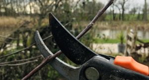 Pruning course at Hockerton Housing Project